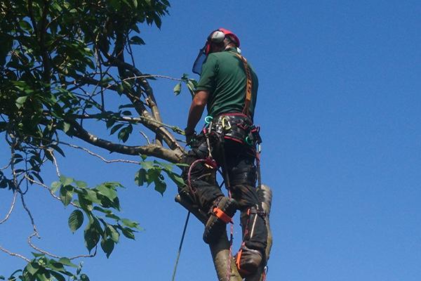 Photo of Absolute Gardens Tree Surgeon